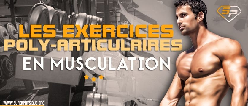 Les exercices polyarticulaires en musculation