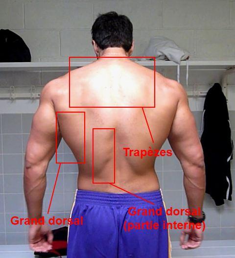 Programme de musculation Super Dos 1b525a26ce5