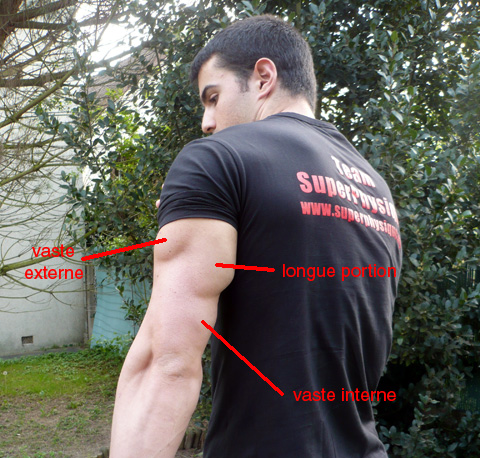 Programme Super Triceps