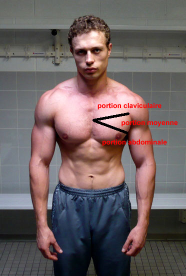 Programme de musculation super pectoraux for Exterieur triceps